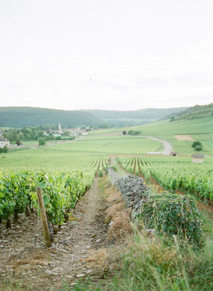 meursault vineyards burgundy france