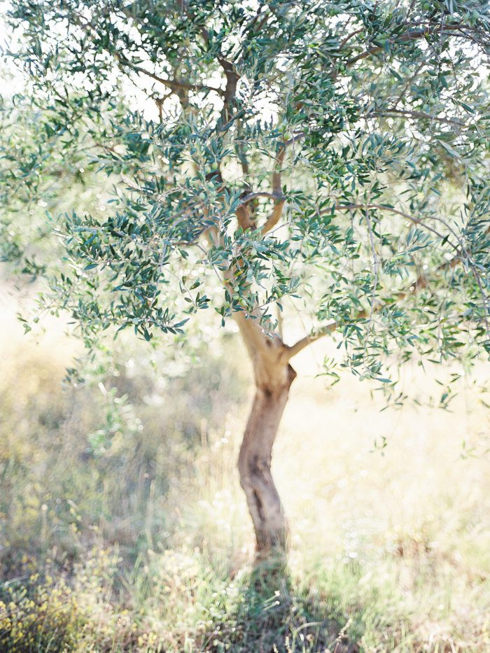 Cucuron France Wedding Venue with olive trees